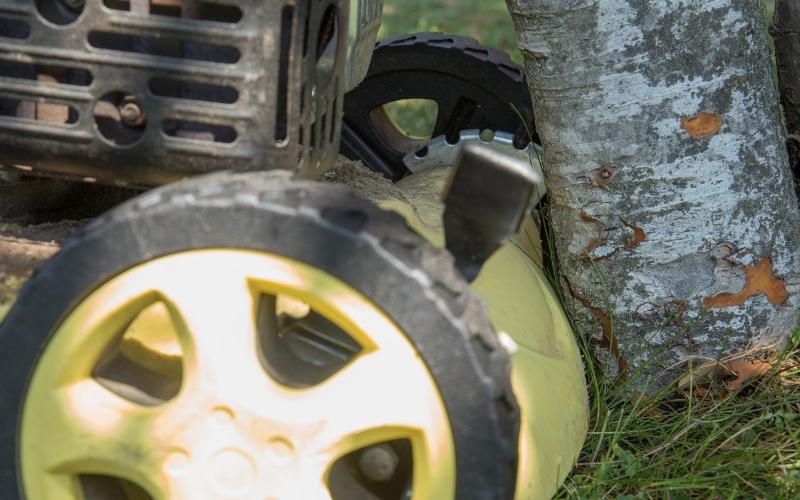 Cortabordes cortando alrededor del árbol
