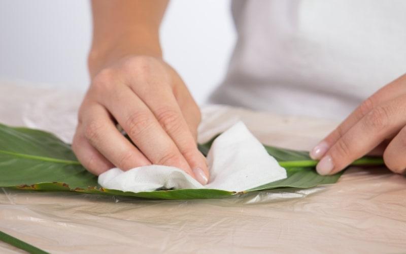 Limpia las hojas con un trapo húmedo